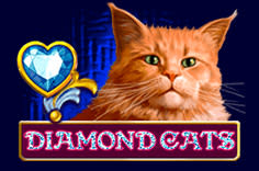 play fortuna — Diamond Cats